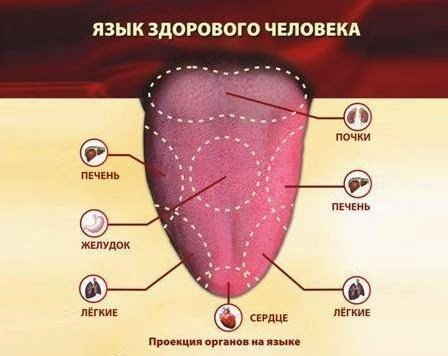 Язык человека и проекция органов