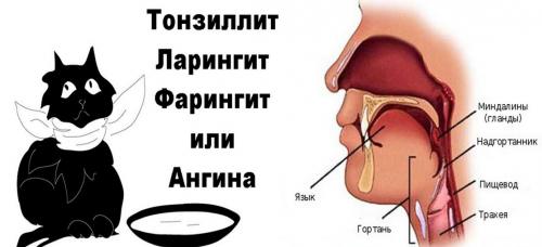 Причина боли - воспаления