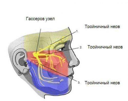 Тройничный нерв вызывает боль