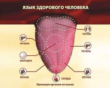Характеристики здорового языка
