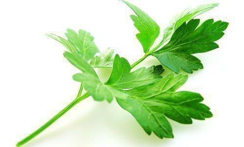 Лист петрушки от галитоза