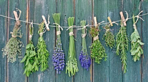 Травы от галитоза применяются в виде отваров и настоек